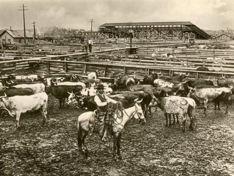 Bellissima questa immagine del 1892 che mostra inequivocabilmente l'incontro tra vecchio e nuovo agli inizi del 1900: cowboy al pascolo delle madrie  e, dall'altro lato, LA Ferrovia!
