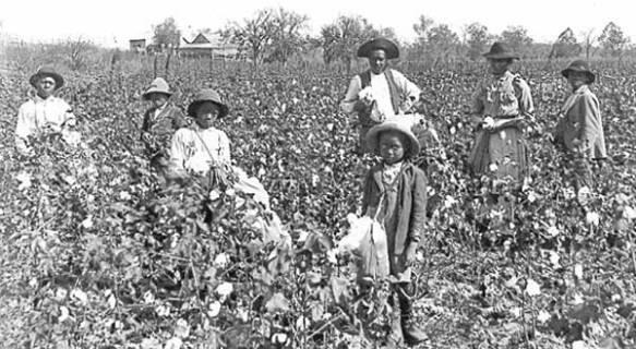Raccoglitori di cotone,inizi 1800