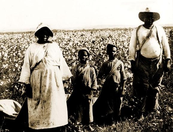 Ecco una classica piantagione di cotone Texana nel 1900.